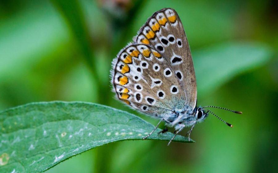 Capturebutterfly